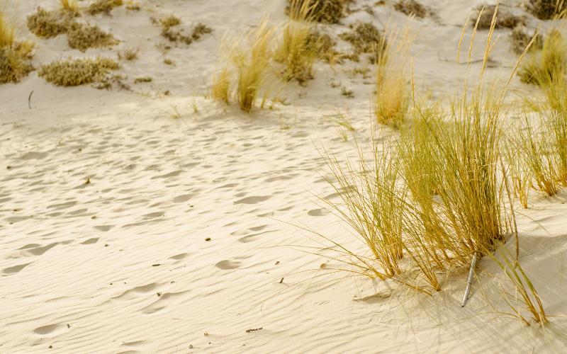 ali-del-mare-dune-di-campana-chia-3